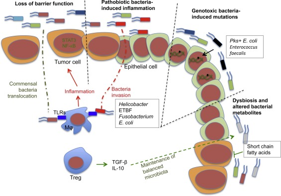 Microbiome Inflammation And Colorectal Cancer Sciencedirect