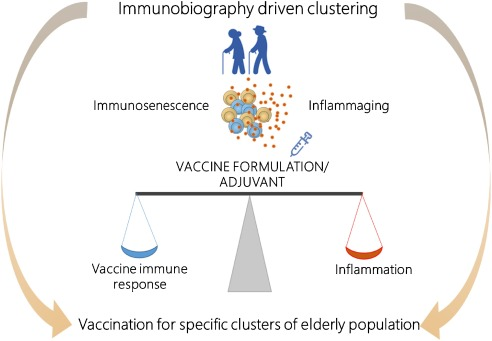 Vaccination In The Elderly The Challenge Of Immune Changes With Aging Sciencedirect