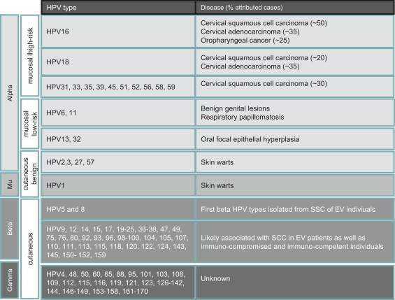 Hpv virus family. Human papillomavirus or hpv family