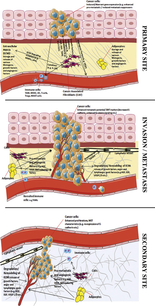 Tissue invasion and metastasis: Molecular, biological and