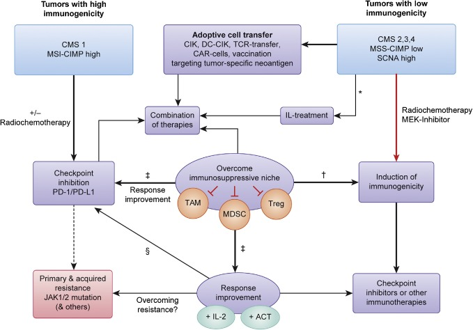 cancer colon immunotherapy)