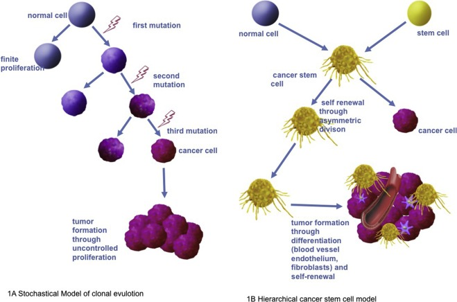 Therapy resistance mediated by cancer stem cells - ScienceDirect