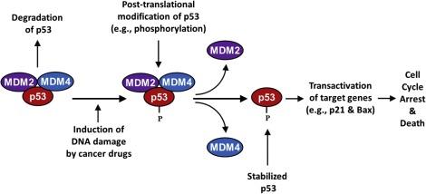 colorectal cancer pathways parasito oxiuros sintomas