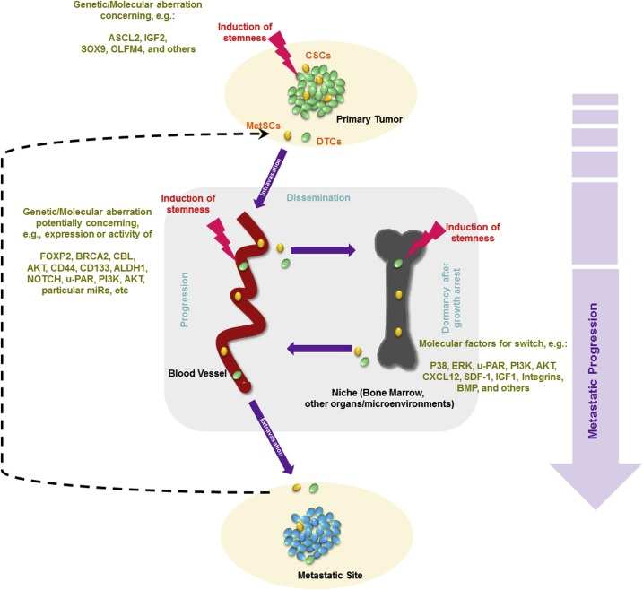 Defining The Metastasome Perspectives From The Genome And Molecular Landscape In Colorectal Cancer For Metastasis Evolution And Clinical Consequences Sciencedirect