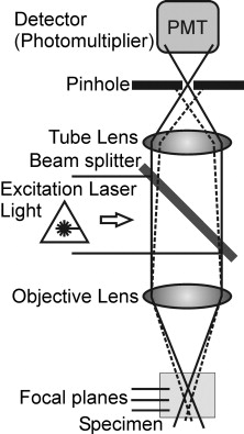 Use of confocal laser scanning microscopy (CLSM) for the