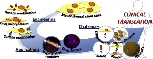 Engineering mesenchymal stem cells for regenerative medicine and