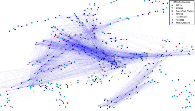 Personalized microbial network inference via co-regularized