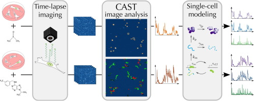 CAST: An automated segmentation and tracking tool for the