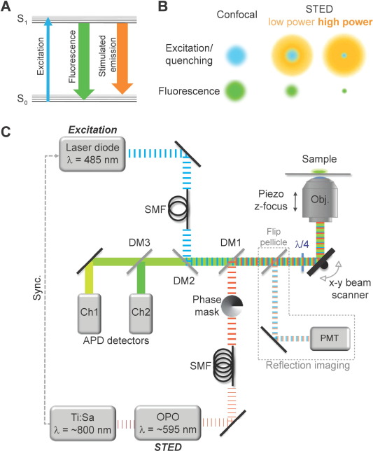 Sted microscopy for nanoscale imaging in living brain slices basic principle of sted microscopy in sted microscopy stimulated emission is used to selectively quench the fluorescence a simplified jablonski diagram ccuart Image collections