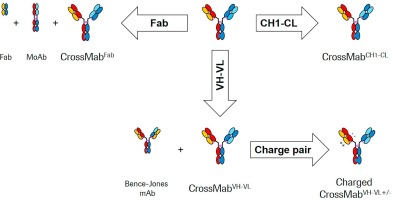 Engineering therapeutic bispecific antibodies using CrossMab