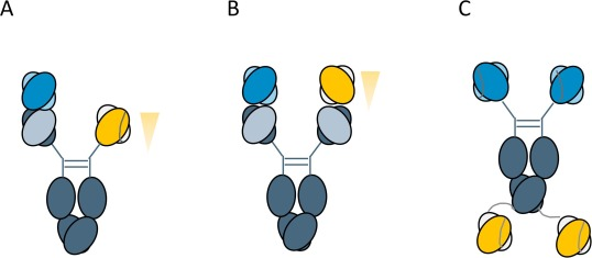 Bispecific T-cell engagers: Towards understanding variables