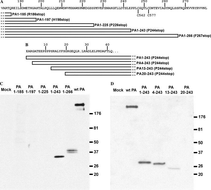 Mammalian Expression Of PAPP A Truncation Mutants To Define The PA LG  Module. (A) The Series Of C Terminal Truncation Mutants Constructed To Define  Domain ...