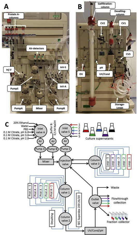 A fully automated three-step protein purification procedure for up