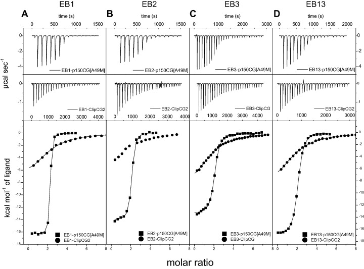 Interaction of mammalian end binding proteins with CAP-Gly domains