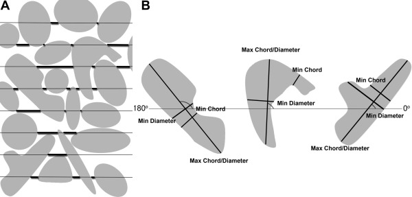 Histocompositional organization and toughening mechanisms in antler ...