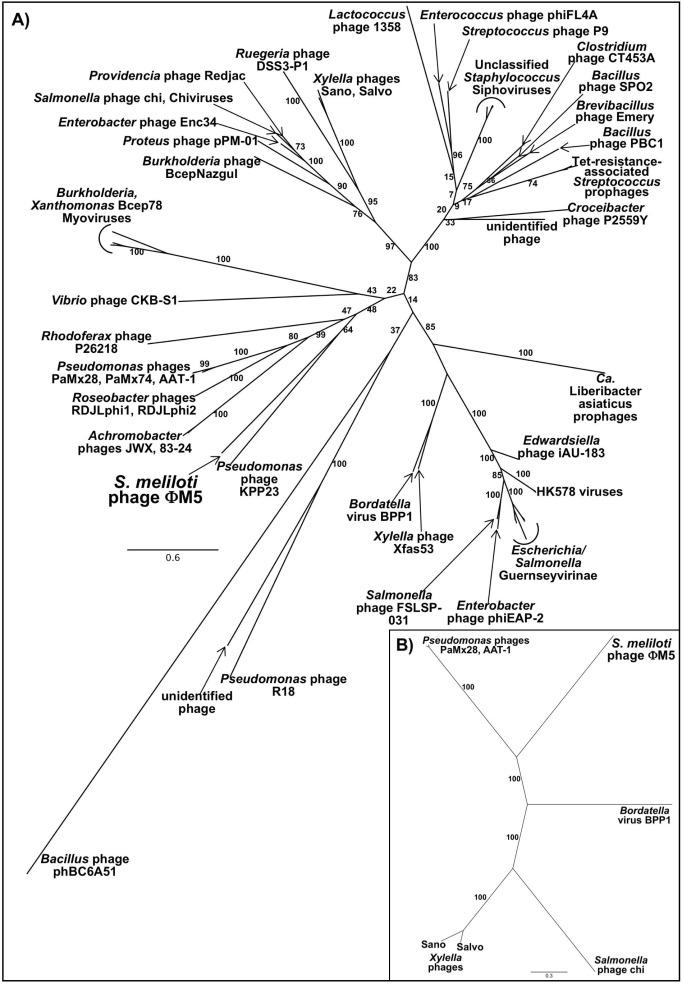structure proteome and genome of sinorhizobium meliloti phage φm5