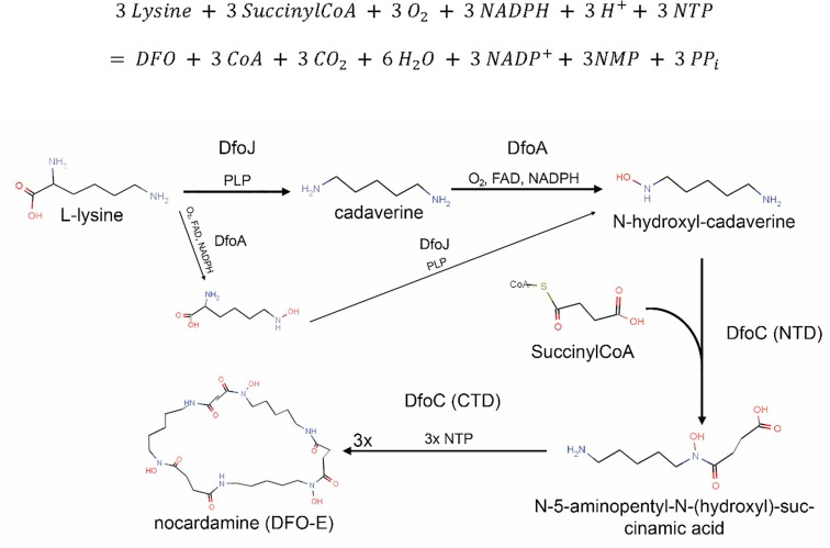 A complete structural characterization of the