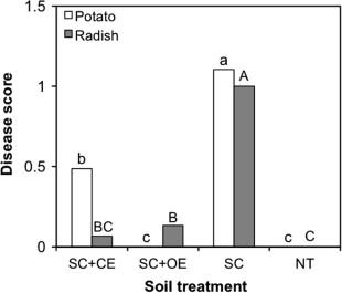 Effect Of Oregano Essential Oil Oe 0 1 μg Cm 3 Soil And Clove Ce On Scab In Potato Open Bars Radish Filled