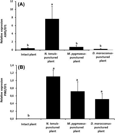 Tomato Plant Responses To Feeding Behavior Of Three Zoophytophagous