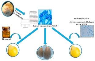 gyógyítsa a papillomavírus illóolajokat gyógymód minden típusú gyermek számára
