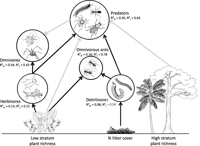 Plant Richness Enhances Banana Weevil Regulation In A Tropical