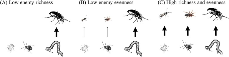 Give predators a complement: Conserving natural enemy