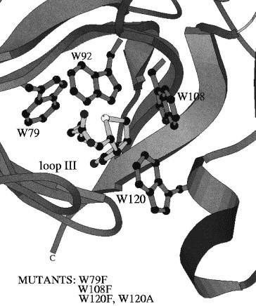 Streptavidinbiotin Binding Energetics