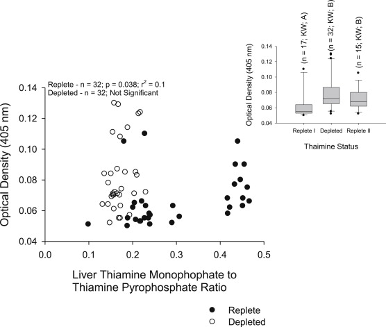 In vitro immune functions in thiamine-replete and -depleted
