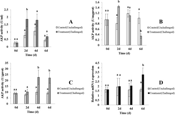 effect of aeromonas salmonicida infection on the akp activities in the serum a mucus b and the skin c of atlantic salmon and akp mrna expression in
