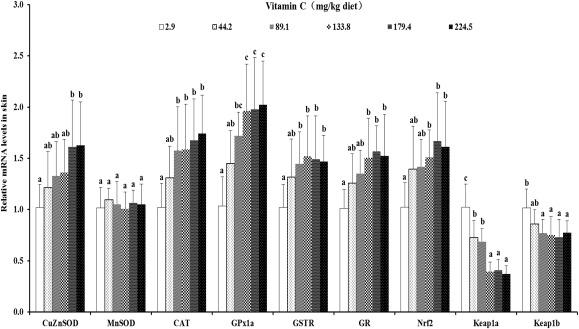 Dietary vitamin C deficiency depresses the growth, head