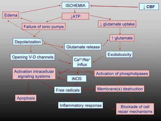 The Effects of Citicoline on Acute Ischemic Stroke: A Review