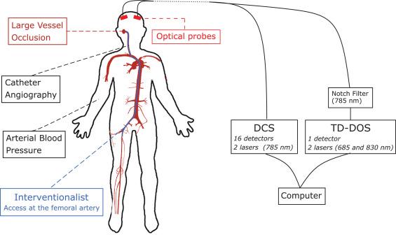 Transcranial Optical Monitoring of Cerebral Hemodynamics in Acute