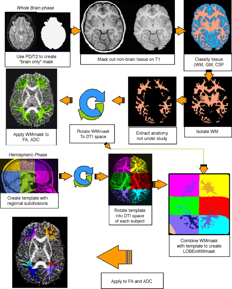 White matter growth as a mechanism of cognitive development in ...