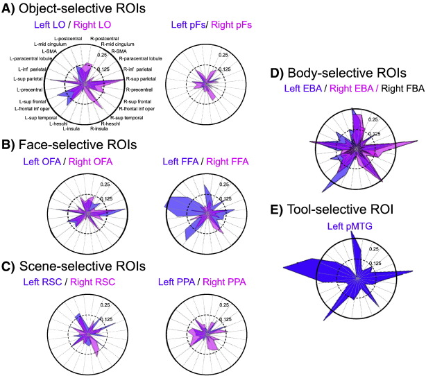 Distinct And Distributed Functional Connectivity Patterns Across