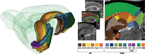 Volumetric Waxholm Space Rat Brain Atlas (v2.0), In Which The Hippocampal  Formation And Parahippocampal Region Have Been Delineated On The Basis Of  MRI ...