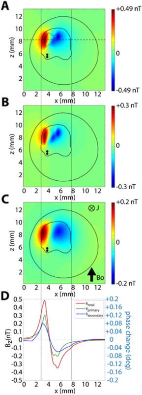 Direct neural current imaging in an intact cerebellum with