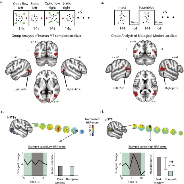 Neural adaptation in pSTS correlates with perceptual