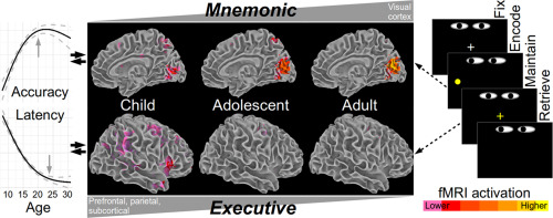 The Adolescent Brain Why Executive >> Protracted Development Of Executive And Mnemonic Brain Systems