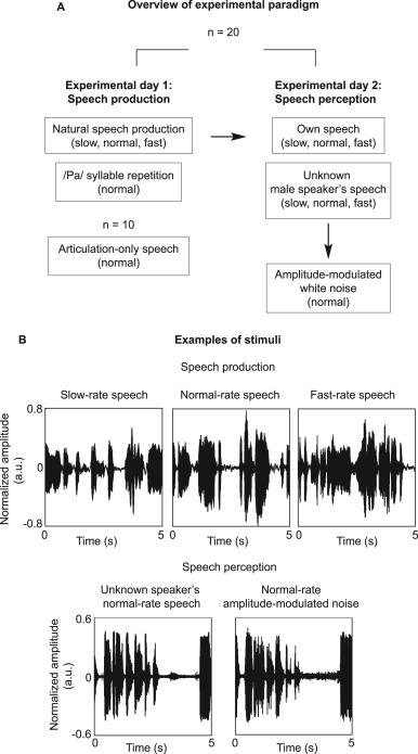 The right hemisphere is highlighted in connected natural speech