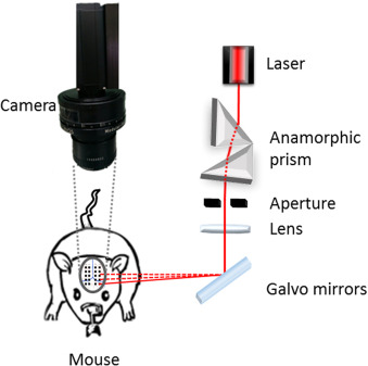 High-density speckle contrast optical tomography (SCOT) for