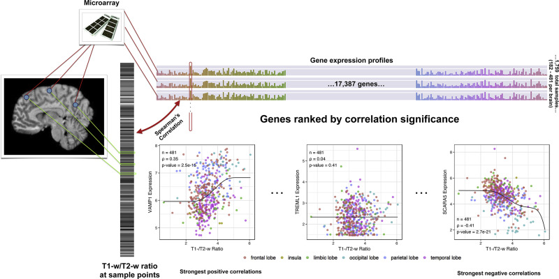 Transcriptomic characterization of mri contrast with focus on the fig malvernweather Choice Image