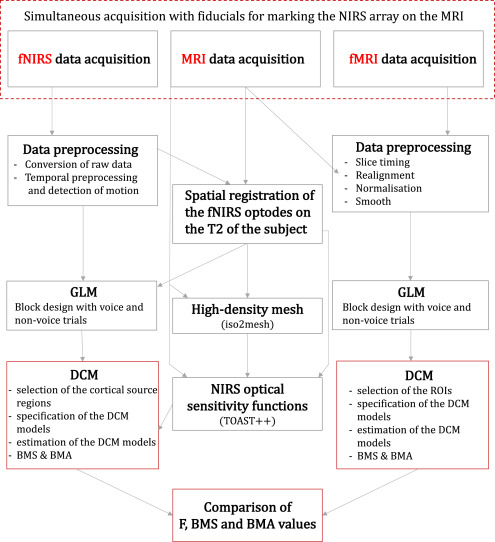 Dynamic causal modelling on infant fNIRS data: A validation