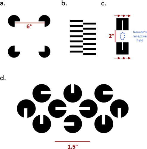 Brain mechanisms for perceiving illusory lines in humans