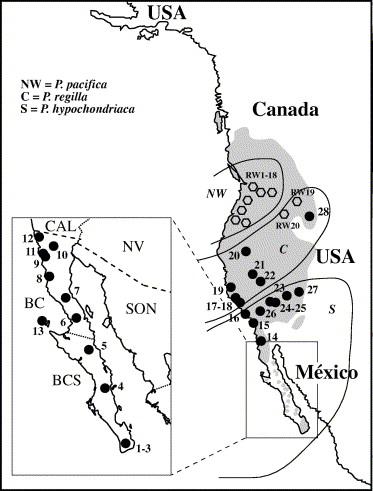 Phylogeography Of Pseudacris Regilla Anura Hylidae In Western