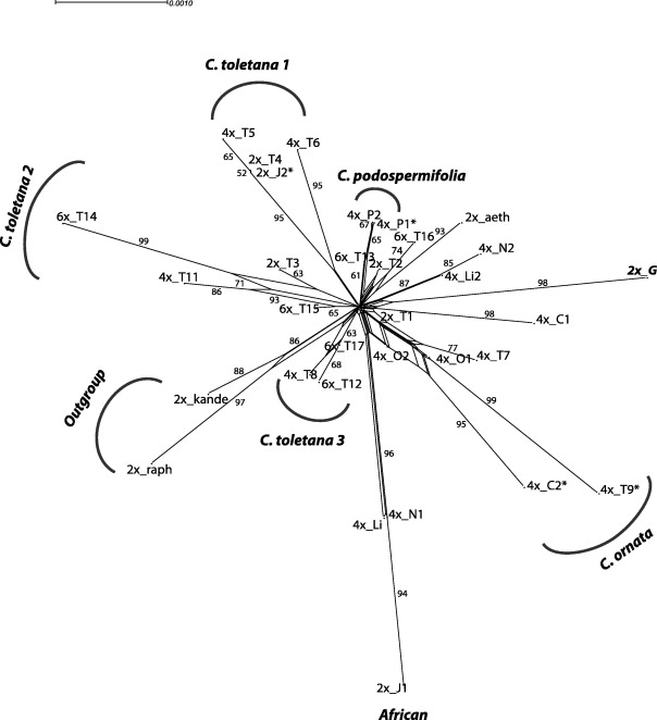 The Polyploid Series Of Centaurea Toletana Glacial Migrations And