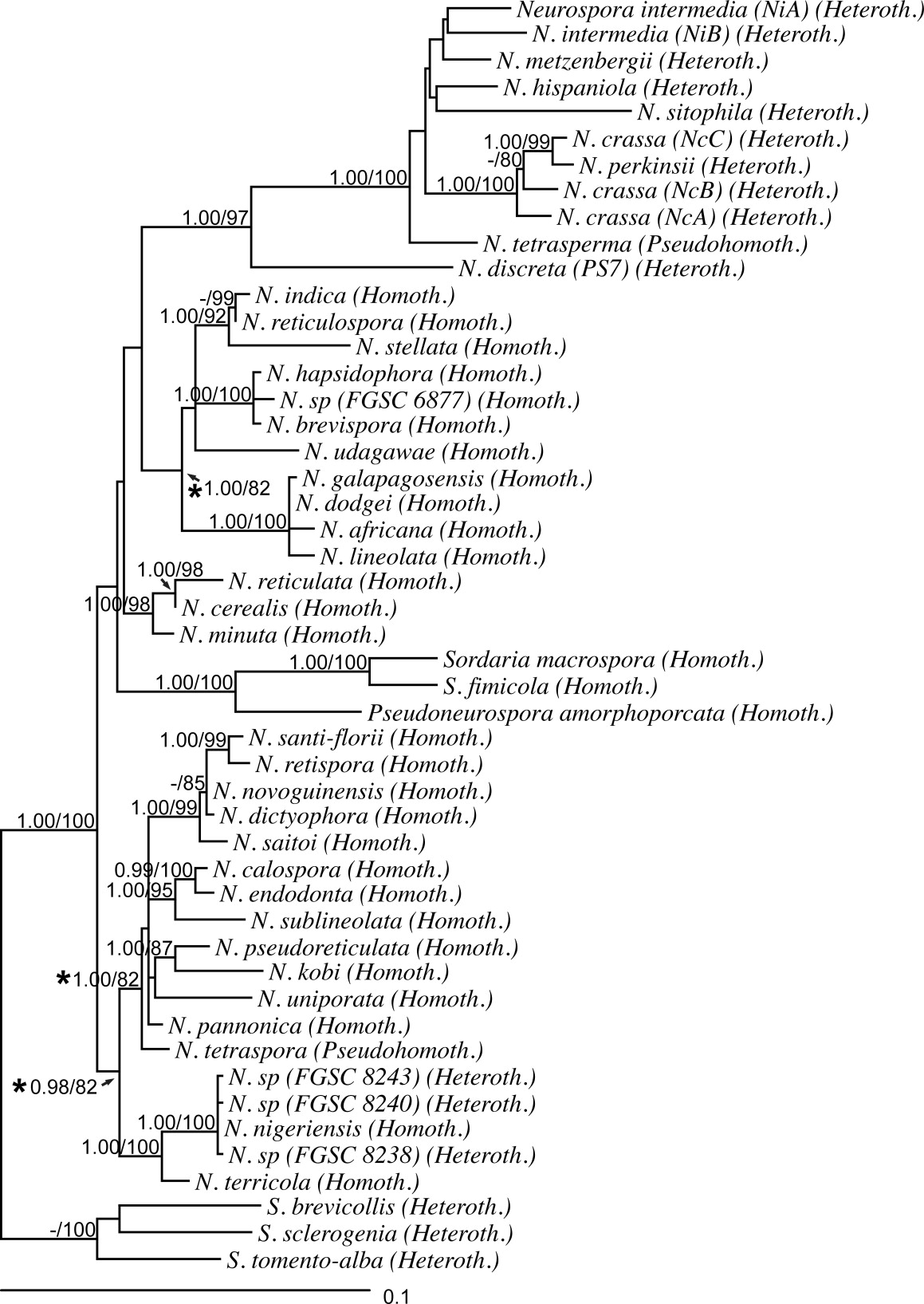 A comprehensive phylogeny of Neurospora reveals a link between ...