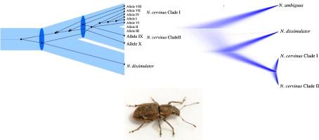 Reproduccion asexual parthenogenesis reproduction
