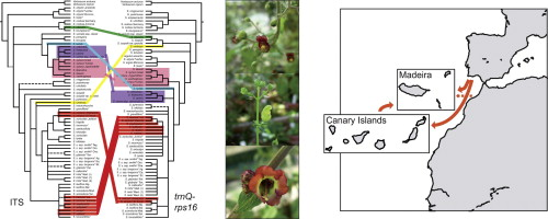 Diversification Of Scrophularia Scrophulariaceae In The Western