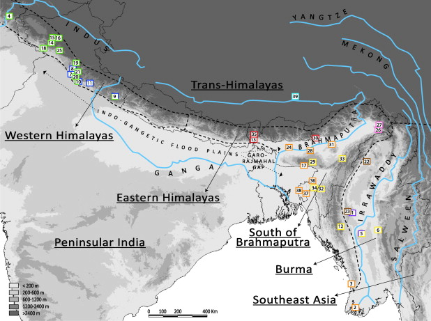Insights into Himalayan biogeography from geckos: A