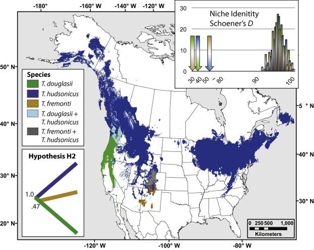 Revision of widespread red squirrels (genus: Tamiasciurus